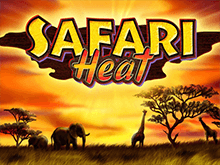 Safari Heat в казино Чемпион