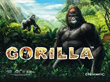 Gorilla в казино Чемпион на деньги